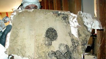 Dangers Of Mold In Your Home